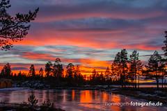 DSC03204 (norwegen-fotografie.de) Tags: norw norwegen norway norge femunden femundsmarka villmark hedmark see wildnis wald landschaft
