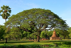 Big tree on the outskirts of Sukhothai [Explore] (joseluis.cueto) Tags: tailandia thailand asia sudesteasitico sukhothai naturaleza nature fantasticnature rboles tree templo temple arqueologa archaeology palmeras canon canon6d eos 6d 2470f4