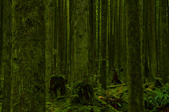 The Green of Fall (Kristian Francke) Tags: pentax tamron green tree trees plant plants moss fall november bc canada british columbia metro vancouver golden ears provincial park