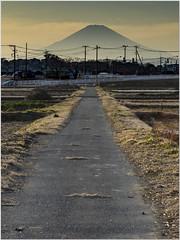 Kamui Fuchi () Tags: nikon japan d4s lensid162 fuji