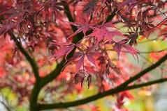 (careth@2012) Tags: fall autumn leaves lead nature scenery scene scenic view