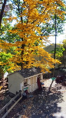 Golden View (SurFeRGiRL30) Tags: fall automobile october 2016 view leavesontrees leaves trees shed backyard orange beautiful green greenleaves driveway nj