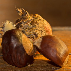 A Couple Of Nuts (Romair) Tags: nuts tabletop rogerjohnson stilllife