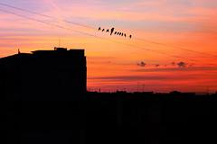 birdy (christianhadzhiyski) Tags: birds sofia bulgaria sun city cityscape