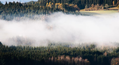 An autumn morning (desomnis) Tags: autumn morning trees fog mist foggy misty haze fall landscape landschaft landscapes mhlviertel austria sterreich obersterreich nature forest woods woodland autumncolors desomnis canon6d sigma70300 morninglight