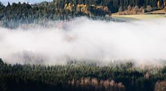 An autumn morning (desomnis) Tags: autumn morning trees fog mist foggy misty haze fall landscape landschaft landscapes mühlviertel austria österreich oberösterreich nature forest woods woodland autumncolors desomnis canon6d sigma70300 morninglight