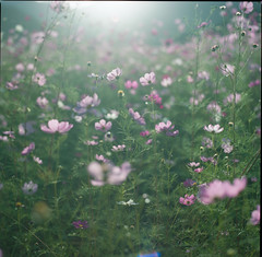 (rosemary*) Tags: 2016 hasselblad cosmos