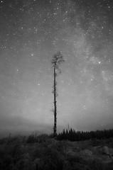 Alone under the stars (ingulfsen) Tags: stars sky winter gjvik norway tree blackandwhite monochrome bw
