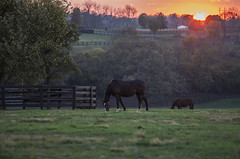 Kentucky Horses in the evening Sun (Klaus Ficker thanks for + 2.000.000 views.) Tags: sunset evening horses horsefarm horse pferde sun usa kentucky kentuckyphotography klausficker canon eos5dmarkiv