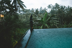 P1050043-Edit (F A C E B O O K . C O M / S O L E P H O T O) Tags: bali ubud tabanan villakeong warung indonesia jimbaran friendcation