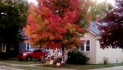 Red truck and tree! - HTT. (Maenette1) Tags: truck tree red house autumn happytruckthursday menominee uppermichigan flicker365