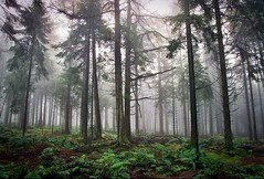 Forest (adriandc2010) Tags: film agfa vista 200asa canon 24105l somerset mendips mist forsest