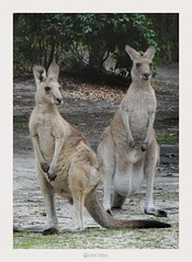 mid north coast - Australia (marcel.rodrigue) Tags: australia midnorthcoast newsouthwales marcelrodrigue photography nature wildlife