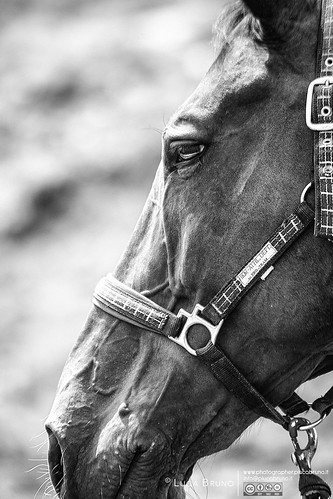 """Horse • <a style=""""font-size:0.8em;"""" href=""""http://www.flickr.com/photos/49106436@N00/20444272264/"""" target=""""_blank"""">View on Flickr</a>"""