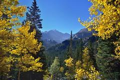 Longs Peak Framed by a Break in the Trees (Rocky Mountain National Park)