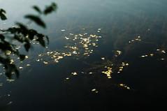 (Alex Shapovalov) Tags: desktop camera trees portrait sky black nature glass field grass leather stone clouds digital forest silver lens photography daylight sand nikon friend dof bokeh outdoor moscow sandy ground gritty front pit equipment form manual depth quarry career openpit d300 japanfashion gavrilov sabulous neploho alexshapovalov