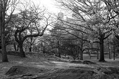 XT1-12-08-14-452-7 (a.cadore) Tags: nyc newyorkcity blackandwhite bw zeiss 35mm landscape centralpark candid uptown lamppost fujifilm uws xt1 zeissbiogon35mmf2 biogont235 fujifilmxt1