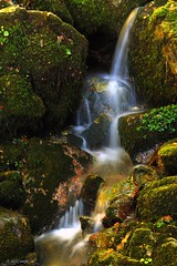 Seda de Biescona (A. del Campo) Tags: autumn espaa naturaleza verde green nature water ro river spain agua nikon rocks silk asturias otoo nikkor seda rocas efectoseda biescona nikond3000 hayedodebiescona