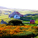 2015 12 Carcass island of Falkland Islands IMG_7556
