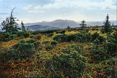 1998 Ural Mountains-8 (Alexander Kondakov) Tags: 1998 kodak kodakektachromee100vs landscape lens perm photobyalexanderkondakov russia ural uralmountains film minolta700si minoltaaf2885mmf3545 minoltaaf75300mmf4556 old
