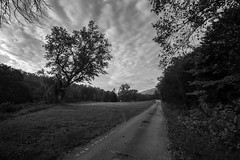 Take the Road (TGB Filmography) Tags: landscape backroads countryside clouds roads blackandwhite bw falltime lake leaves land southern south tennessee