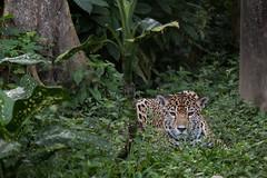 Tika 3 (fotodoc61) Tags: animals
