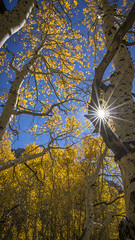 Fall is here (Busmalo) Tags: fall colors autumn sony a7ii sigma landscape 2470