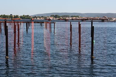 Rainbow oyster lines (Anduze traveller) Tags: france languedocroussillon hrault etangdethau bouzigues oysterfarming