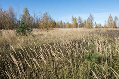 Underbrush (andrey.senov) Tags: russia kostroma province autumn fall sky clouds trees field grass weed          fujifilm fuji xa1 fujifilmxa1 35faves