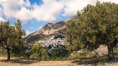[ #300 :: 2016 ] (Salva Mira) Tags: sella oliveres olivos olivetrees marinabaixa lamarina pasvalenci salva salvamira salvadormira
