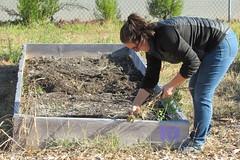 IMG_0877 (hammonton_garden) Tags: 2016 communitygarden fall hammonton southjersey nj gardenstate