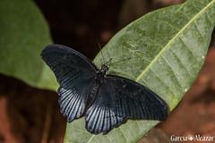 Mariposa 8 (Manolo G.A.) Tags: canon 50d 18200mm mariposario njar almera mariposa butterfly