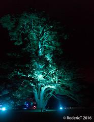 20161029-IMG_9255 Tree Compton Verney Warwickshire.jpg (rodtuk) Tags: phototypes 80d plant england b23 nature warwickshire comptonverney midlands places uk kit photographicequipmentused