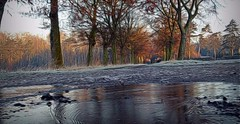 2016-11-13 white frost 4 (april-mo) Tags: frost whiteflower gele cold froid nature reflection distorted puddle frostedpuddle