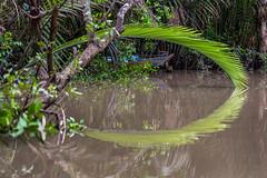Lost place in Mekong river (bienve958) Tags: mekong mytho vietnam ankhánh bếntre vn southeastasia mekongriver river boat mythoriver landscape water paisaje saariysqualitypictures canonflickraward
