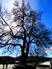 Νεγαδες Ζαγοροχωρια DSC00603 (omirou56) Tags: 43ratio sonydscwx500 ζαγορι νεγαδεσ δεντρο ουρανοσ συννεφα σιλουετεσ ελλαδα ελλασ