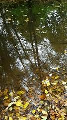 IMG-20161105-WA0033 (Einheitsbrei) Tags: einheitstochter autumn fall herbst dsseldorf wasser reflection spiegelung