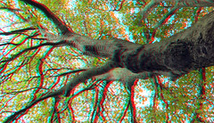 Platanus in Arend Maartenshof Dordrecht 3D (wim hoppenbrouwers) Tags: platanus dordrecht 3d anaglyph stereo redcyan plataan boom tree arendmaartenshof