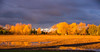 from my kitchen window (bonnie5378) Tags: autumn treesleaves nov2016 frommykitchenwindow naturescarousel ngc npc