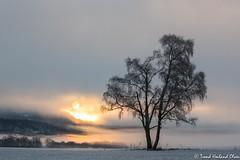 Trond_1116-1235 (Trond Hovland Olsen) Tags: soloppgang vinter kulturlandsakp skien sunrise winter gjerpensdalen