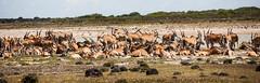Sudafrica (andreadegi) Tags: overbergdc westerncape sudafrica za