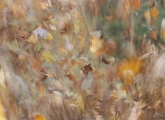 Blown away (Jeannine St-Amour Photography) Tags: fall leafs movement nature abstract impressionism ngc