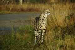Even kijken. (limburgs_heksje) Tags: nederland niederlande netherlands noord brabant beekse bergen safaripark dierenpark
