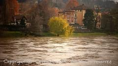 Torino (17) (cattazen.com) Tags: alluvione torino po esondazione parcodelvalentino murazzi pienadelpo cittàditorino turin piemonte