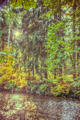 Herbstwald - autumn forest (ralfkai41) Tags: herbstwald autumn creek walf herbst nature autumnforest outdoor hdr bach natur forest