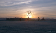 Winter is coming (christophecalsius) Tags: frost frosty winter wintermorning morning sunrise tree sky clouds landscape maasmechelen belgium