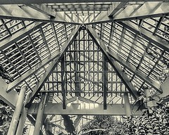 triangle_trio (gerhil) Tags: architecture indoor greenhouse geometry shape pattern abstract monochrome blackandwhite triangle naturallight autumn november2016 niksilverefexpro2