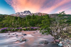 Dusk - Cerro Castillo (Captures.ch) Tags: 2016 black brown burning bush capture cerrocastillo chile clouds dusk flowers gray green hill landscape lupines mountain nature november orange perfect red sky southamerica travel trees water waterfall white wind yellow