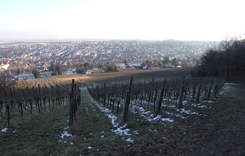 Vineyard, 12.02.2012.
