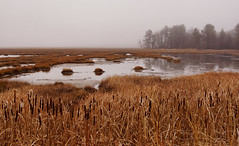 scarborough marsh, maine (jtr27) Tags: dsc02635e jtr27 sony alpha nex7 nex emount mirrorless sigma 1770mm f2845 dc dcmacro scarborough maine marsh newengland laea2 adapter amount landscape fog